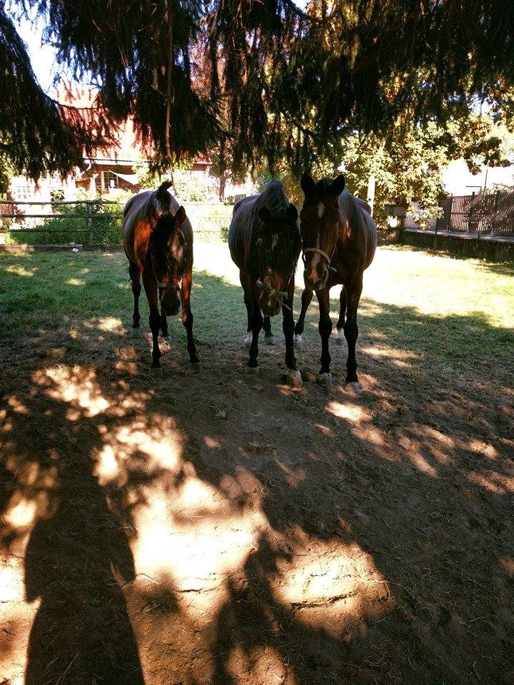 Beine anziehen und losrollen - fette Pferde Part 2